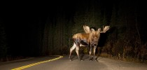 7 Biggest Hazards on the Road