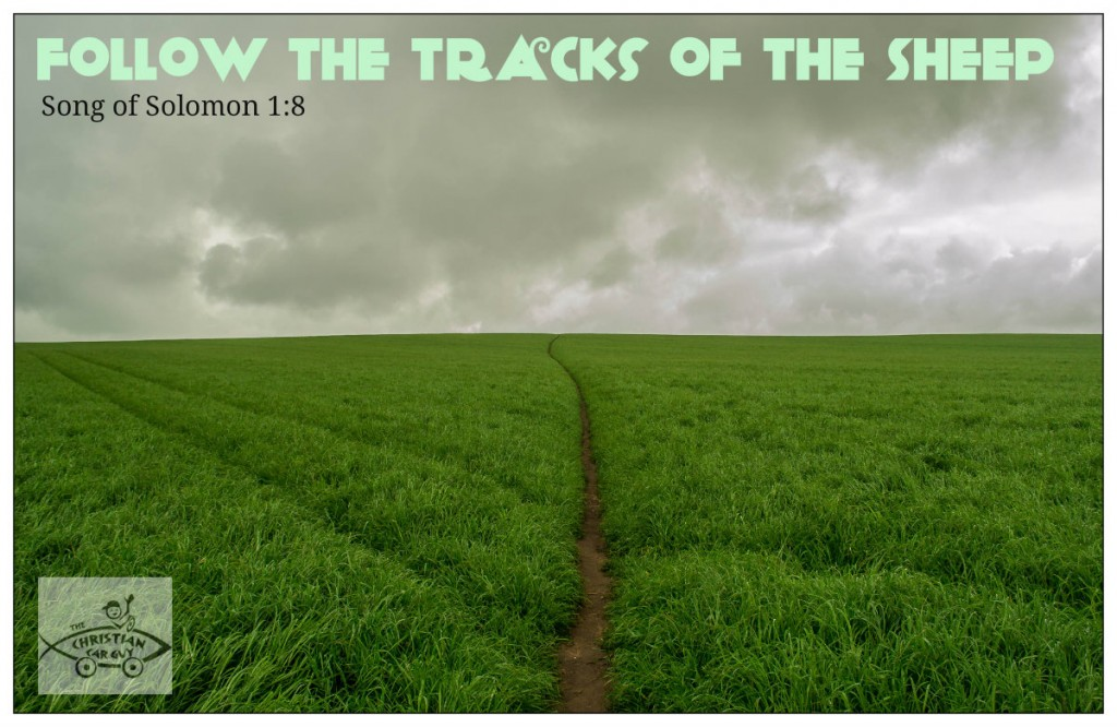Follow The Tracks of The Sheep